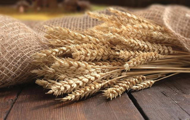 grano da macinare con mulino macinacereali