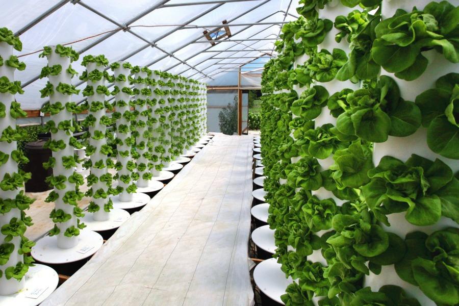 su agritechstore i migliori multiparametri a prezzi vantaggiosi spedizioni tempestive